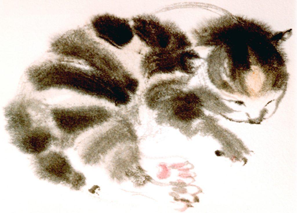 4 day-old kitten
